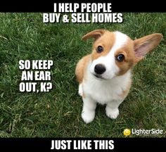 puppy-with-ear